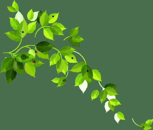 Fondo de hojas